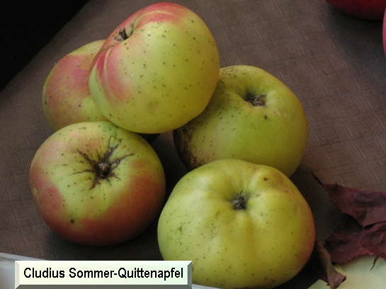 Pomme Cludius Sommer-quittenapfel