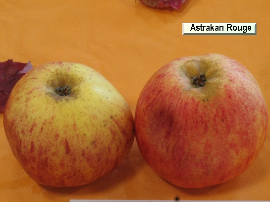 Pomme Astrakan Rouge