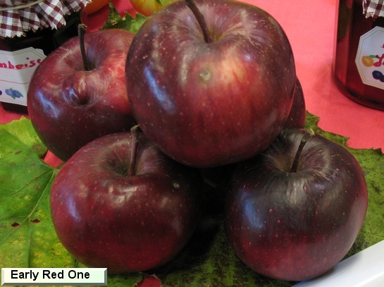 Pomme Early Red One®