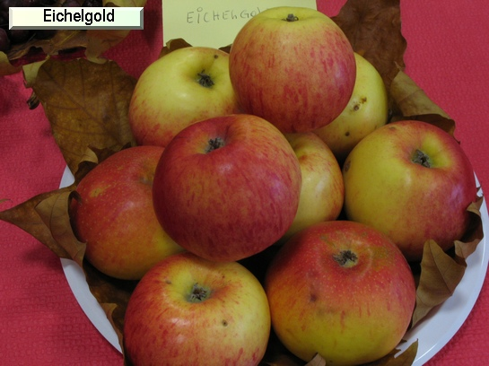 Pomme Eichelgold