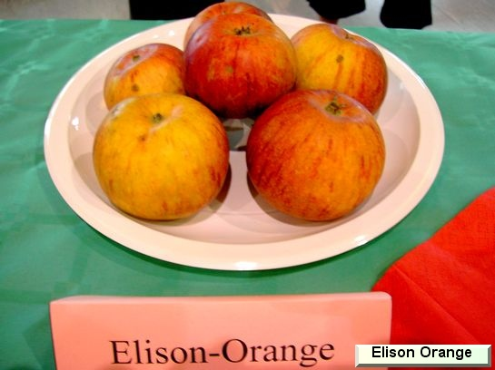 Pomme Ellisons Orange