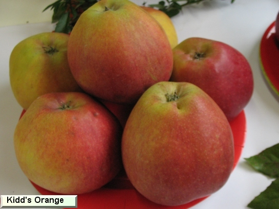 Pomme Kidd's Orange