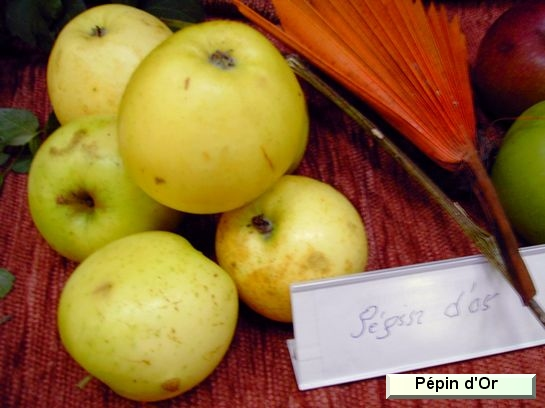 Pomme Pépin d'or