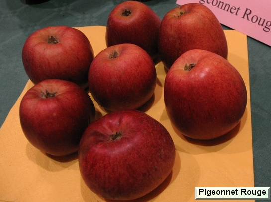 Pomme Pigeonnet Rouge