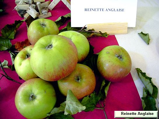 Pomme Reinette Anglaise