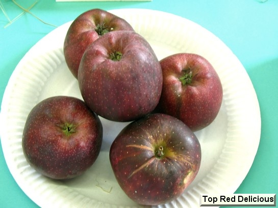Pomme Top Red Delicious