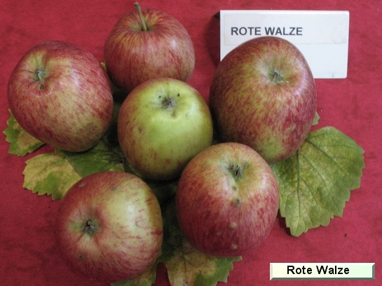 Pomme Rote Walze